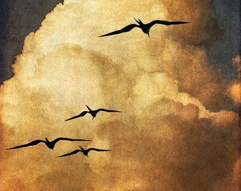 Frigatebirds at Sunset