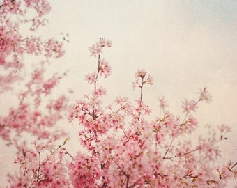 Cherry Blossom Spring Photo, Spring Photography, Pink, Nursery Art, Room, Nature, Pastel, Tree Photo, Spring Tree Photo, Nature Print