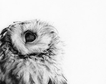Owl, charcoal drawing, giclee print