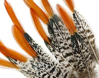 """5 Pcs LADY AMHERST Red Tips 4""""-12"""" Natural Feathers"""