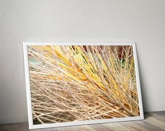 Twigs Color Macro Nature Photo