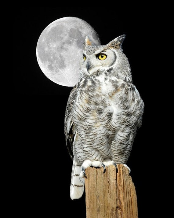 Classic Owl and Moon