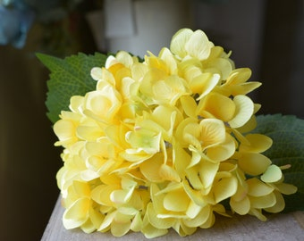 Splendid Hydrangea in yellow -ITEM021