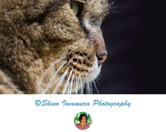 Cat Photo Print Printable, Kitten Photography Cute Cat Photography