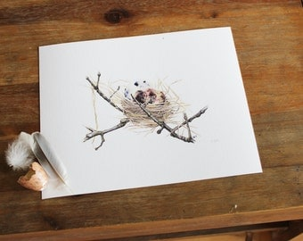 Nest Print, Ink drawing, watercolour painting by Aimee Nesbitt.