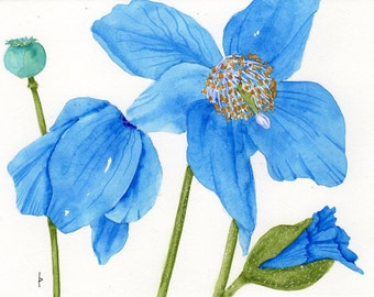 brilliant BLUE POPPIES painting original watercolor SFA portrait