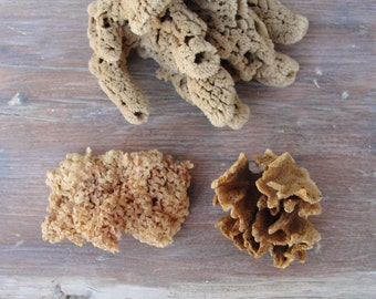 Beach Home Decor Natural Sea sponge, Sea weed, Nautical, Coral Marine, Aquarium Decor, Instant collection