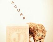 nursery decor, jaguar photo, ABC art, toy photo, child room art, letter art, alphabet photo, alphabet art, nursery art, childs room decor,