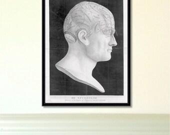 Phrenology Head antique reproduction print giclee print phrenology print anatomy print vintage print antique print phrenology head