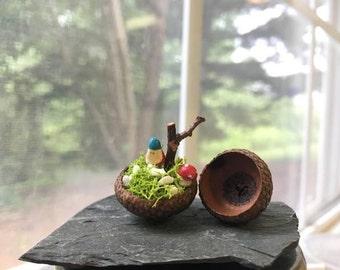 Tiny Fairy Garden in acorn cap/ Miniature Garden / Fairy Garden Accessories / DollHouse Accessories/Terrarium Accessories/ Acorn Cap House