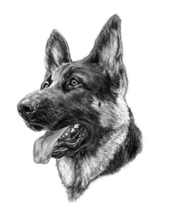 Dog Lover Gift Idea Pet Portrait Dog Sketch