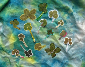 15 Lucky FOUR LEAF CLOVERS, Ready to use in Papercraft, Fifteen Real Preserved Four-Leafed Clover
