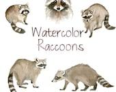 Watercolor Raccoons, Animal Clip Art, Nature clipart, Forest Clip Art, Wild Animals,  Fauna Clipart, Animal Art