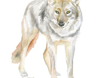 Coyote Watercolor Painting 5x7 Giclee Print Reproduction - Western Art Texas Wildlife