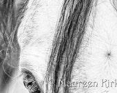 Horse canvas print gray Arabian horse eye black and white horse decor horse wall art horse large art photography art print photo