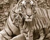 Safari Nursery Decor, BAB...