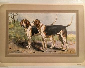 1930's Chromolithographs of Hunting Dogs - Harrier, Pointer, Irish Setter