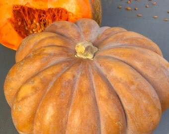 Musquee de Provence Heirloom Pumpkin Large Fruit Best Tasting Variety Very Rare Seeds