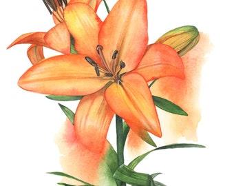 Lily watercolour painting print - A4 size medium print - Botanical art - OL0916 - Flower wall art - Botanical Print- Orange Lilies