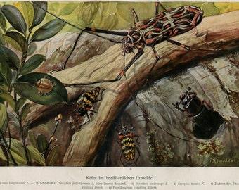 Vintage Print Beetles Brazil Brehms Tierleben 1920s Entomology