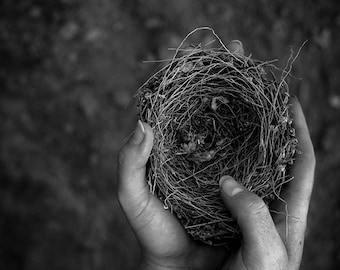 The Promise // Black and White Photographic Print // Nest Hands Fragile Nature