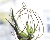 Tillandsia Ornaments, air plant ornaments, air plant hangers, hanging plants