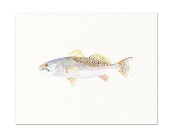 Speckled Trout Watercolor Painting.