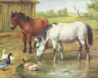 Regarding Ponds - Vintage 1940s Artist-signed Ponies and Ducks Postcard