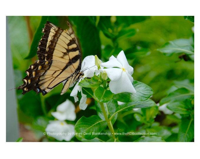 Butterfly Among the Vinca Photograph
