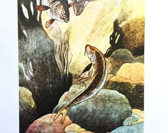 1913 CHARLES ROBINSON FISH Print Ideal for Framing