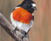 Bird Art Wildlife  Scarlet Robin Australian Bird SFA  Original hand painted acrylic bird painting by Australian Artist Janet M Graham
