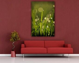 Green Grass Photography, Dew Drops Morning Nature Photograph, Vertical Home Decor Wall Art, Water Drop Fine Art Macro Grass Photo Print