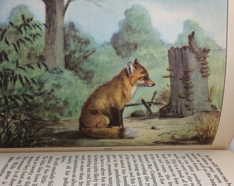 Animals, Selected from Life Histories of Northern Animals, Ernest Thompson Seton, Children's book, Nature Book, Animal book, Natural History