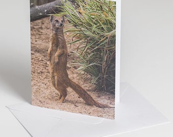 Mongoose on tippy toes - greetings card