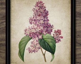 Lilac Print - Lilac Tree Illustration - Lilac Flower - Vintage Botanical - Digital Art - Printable Art - Single Print #13 - INSTANT DOWNLOAD