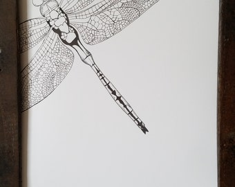 Intricate Dragonfly Print