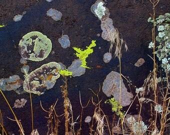 Lichen on Rock, Pilar, New Mexico