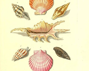 Five different vintage seashell prints,  printable digital images for DIY beach cottage decor.