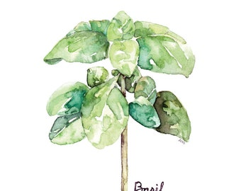 "Basil Herb Painting - Print from my Original Watercolor Painting, ""Basil"", Kitchen Decor, Green Herb, Botanical, Herb Watercolor, Herb Plant"