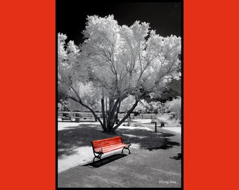 Red Bench in Infrared Park , Fine Art Photography, Metallic Paper  / Metal Print