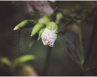 Blooming Flower Photography. Flower Photo. Flower Print. Flower Fine Art Photography. Botanical Print. Botanical Art Print.