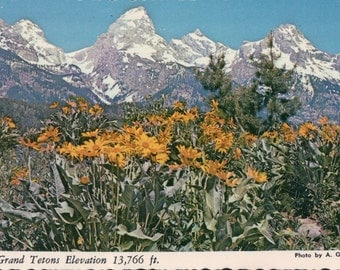 Grand Tetons / Grand Teton National Park / Wyoming / Plastichrome Colourpicture (1938-1969) / Postcard