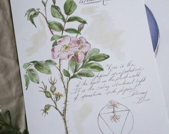"Digital print of my original wild Rose botanical illustration, botanical print, floral print, wildflower art - 8.5 x 11"""