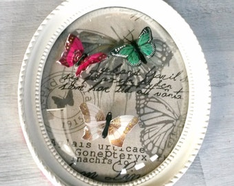 Butterflies, butterfly, shabby frame