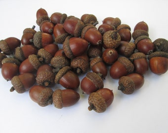 50 middle acorn for decoration. Natural acorns from the forest. Lacquered acorns for different decorations.