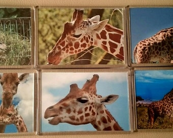 Giraffe Fridge Magnet, Set of 6/ Refrigerator Magnets / Kitchen Decor