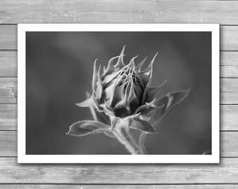 Black and White Photography, flowers art photo sunflower bw prints nature wall art floral prints photo, Sunflower, Art Photography, Marco