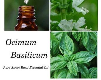 Sweet Basil Essential Oil, Basil Essential Oil, Ocimum basilicum – 100% Pure Authentic Sweet Basil EO
