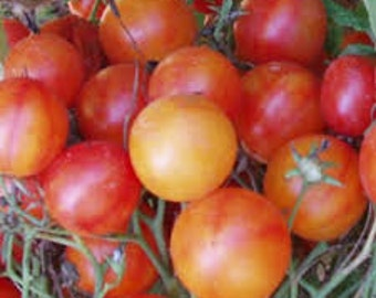 Isis Candy Cherry Heirloom Tomato Seeds, Naturally Grown in the Pacific NW
