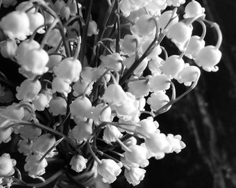 Black & White Photography, Minimalist Home Decor, Lily of Valley, Fine Art Photo Print, Simple Romantic Modern, Nursery, Office, Bedroom Art